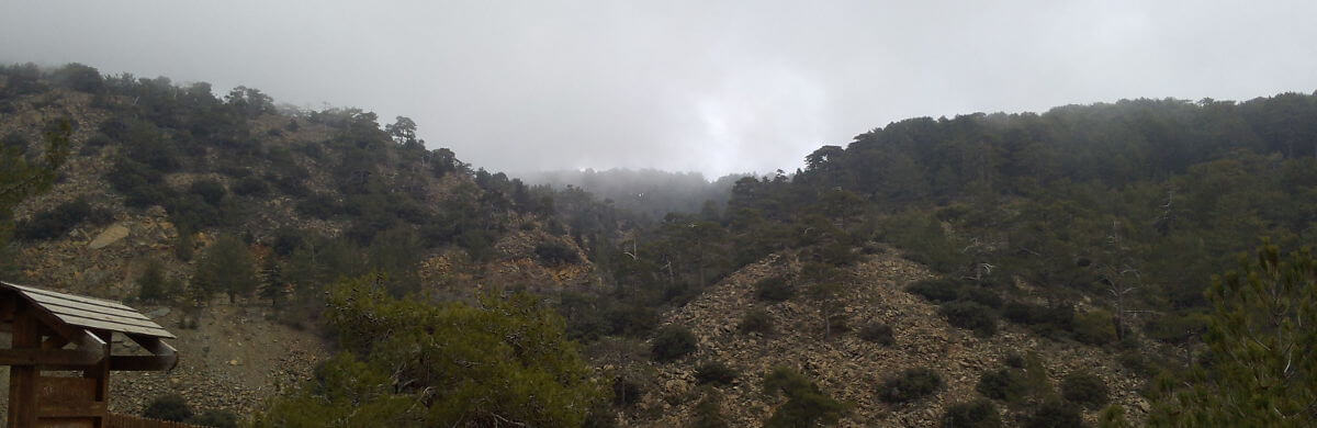 A foggy day in the Troodos mountain range